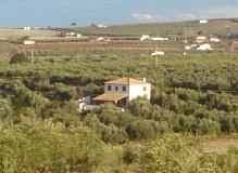 Rodeado de olivar centenario